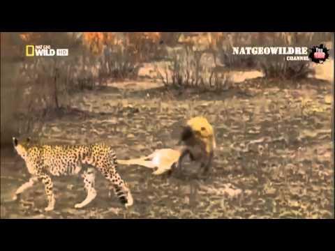 леопард — новые прикольные фото, анекдоты, видео, посты на