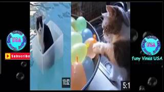 funny cat videos for kids youtube   Funny Cats Compilation 2018 - Funny Cat talking -Funny Vines USA
