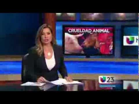 Univision Network.....Slaughter Farm Raid