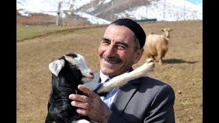 """Bingöllü Çoban, 8 Yıl Sonra Yine """"Yas Yas Yas Gley"""" Dedi, Bu Sefer Koyunlar Geldi"""