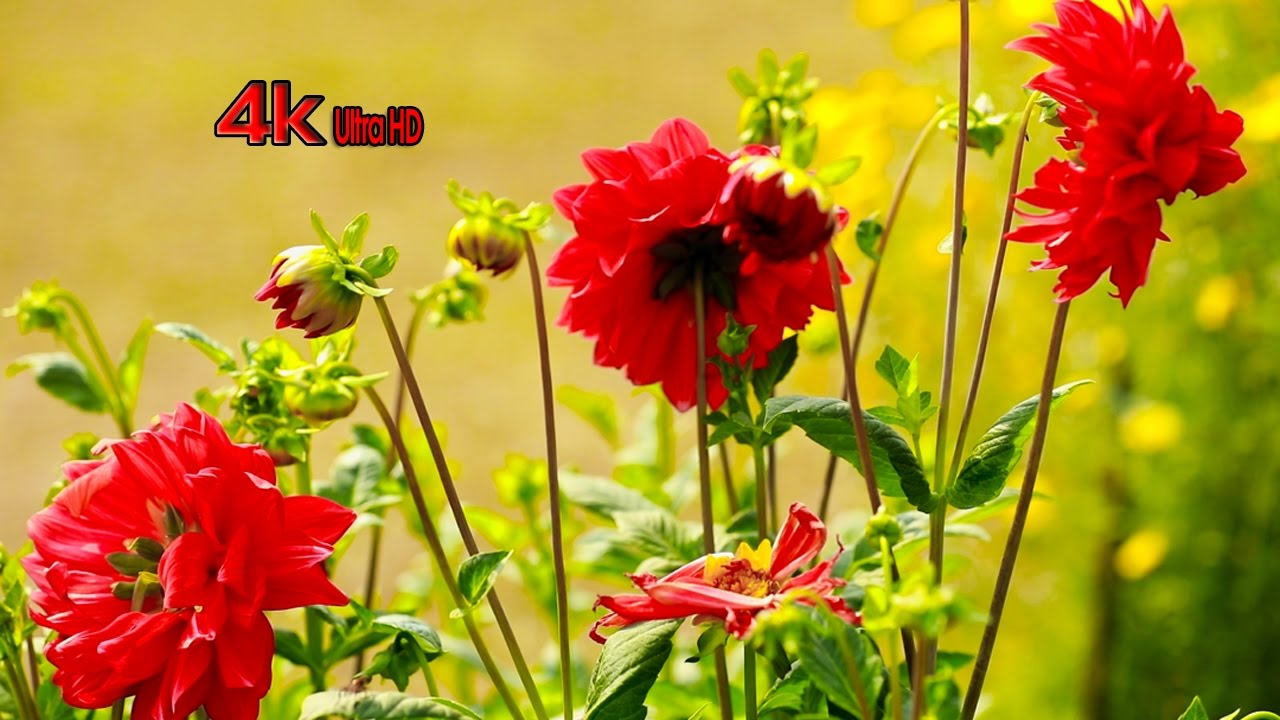 Natural Beautiful Flowers Planet Earth Amazing Nature 4k Video Best Relax Music Youtube