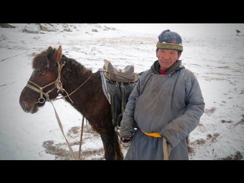 Bringing Rapid Flu Diagnostics to Rural Areas in Mongolia: A DGHI One Health Project