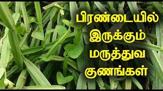 பிரண்டையில் இருக்கும் மருத்துவ குணங்கள் | Medicinal Benefits of Pirandai