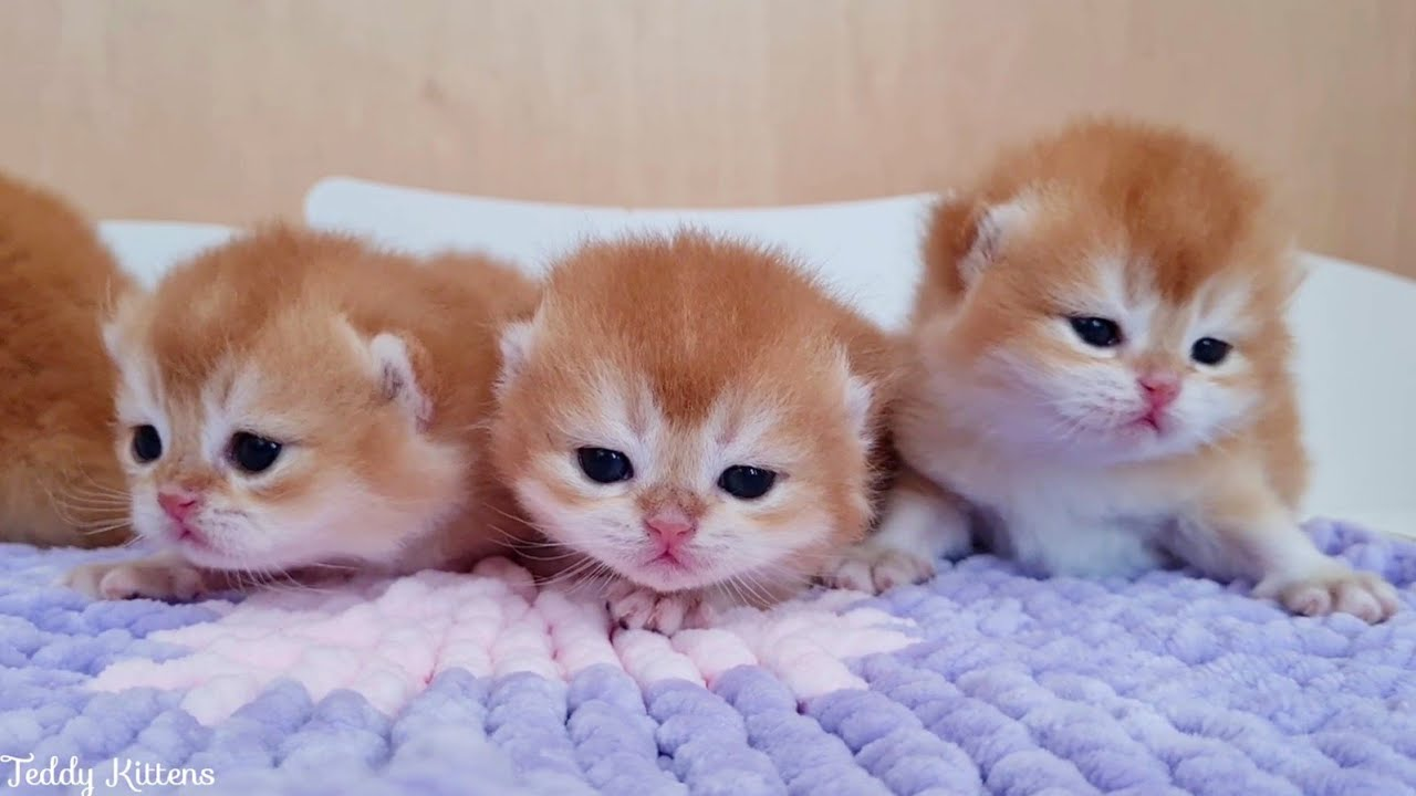 Tiny Kittens finally saw their mommy |  They opened eyes 😍