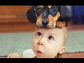 funny baby clothes for girl|All Time Fun |Watch Funny Videos