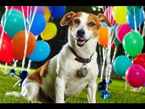 Dogs Who Love Balloons