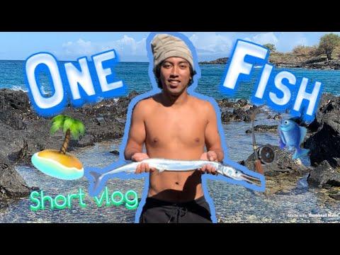 BIG STICK FISH WITH TEETH! (Aha) | SHORT HAWAII VLOG 18