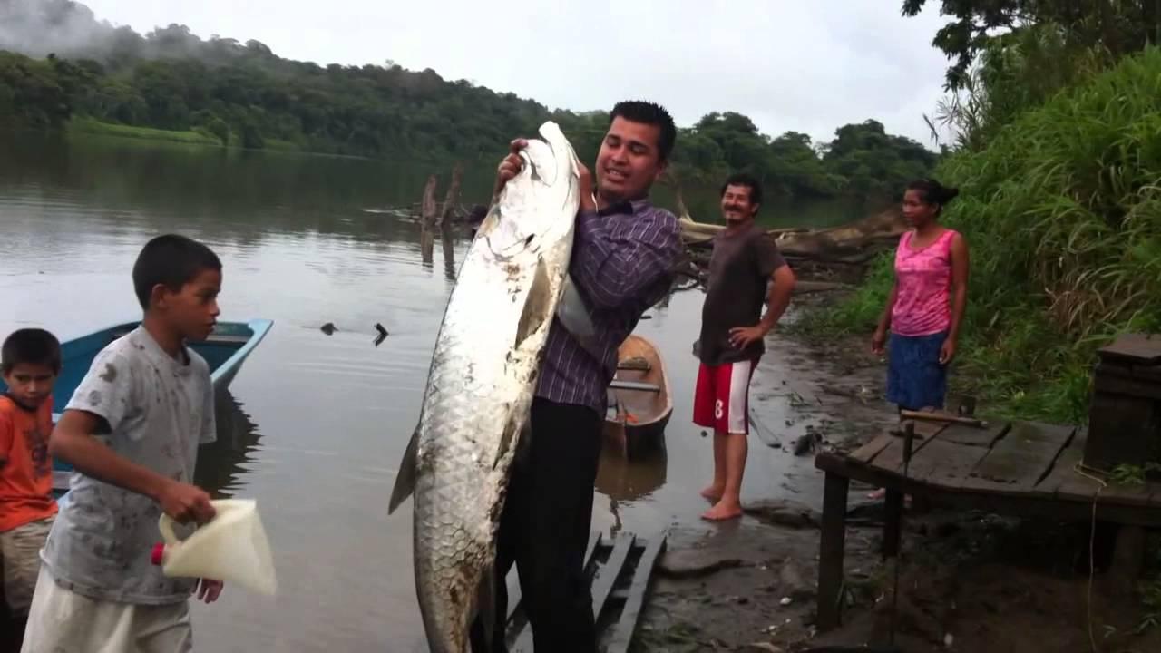 Pesca el sabalo mas grande del mundo pez de rio mas for Cual es el colchon mas grande
