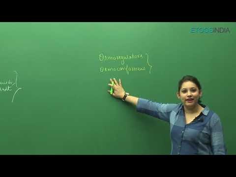 NEET (Biology) Excretory Products and their elimination by Dr  Shivani Bhargava (SB Mam)