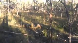 Australian Soldier Fail