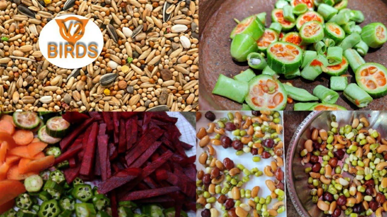 All Birds Best Breeding and healthy foods |V2BIRDS|