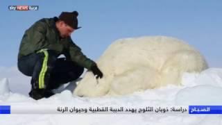 ذوبان الثلوج يهدد الدببة القطبية