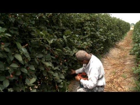 Portugal: Seasonal Workers Sought | European Journal