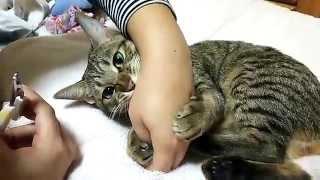 【猫ちゃん】そんなに爪切りが嫌ですか!?