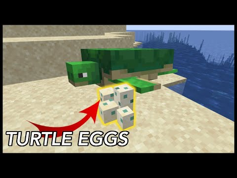 How To Get Turtle Eggs In Minecraft