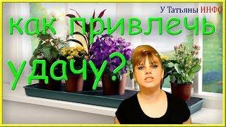 Комнатные растения, приносящие удачу и счастье в дом!