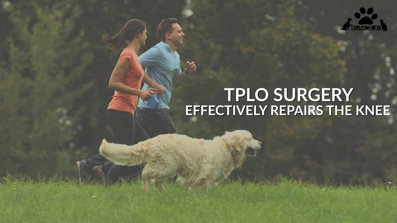 TPLO Surgery - Top Rated Local® Pet Surgery In Kansas City