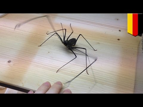 Whip spider: German man posts video of him getting attacked by whip spider - TomoNews