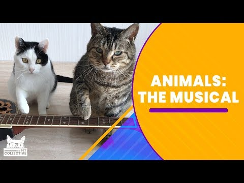 Animals: The Musical