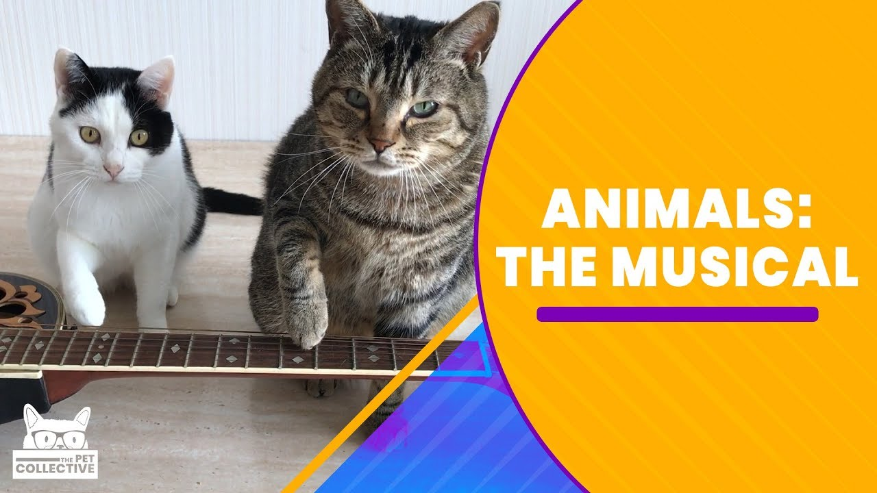 Animals: The Musical | The Pet Collective