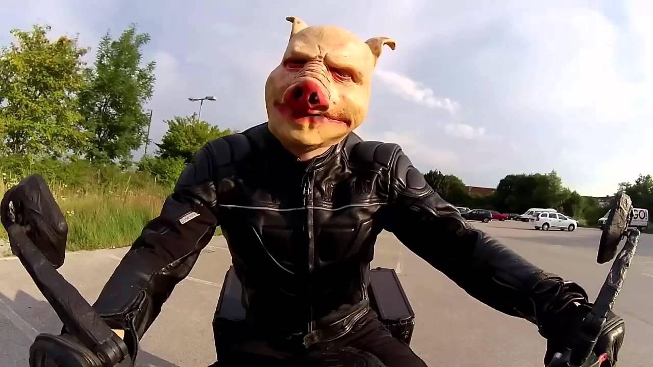 dummes motorrad f hrt schwein ohne helm veganer jubeln. Black Bedroom Furniture Sets. Home Design Ideas