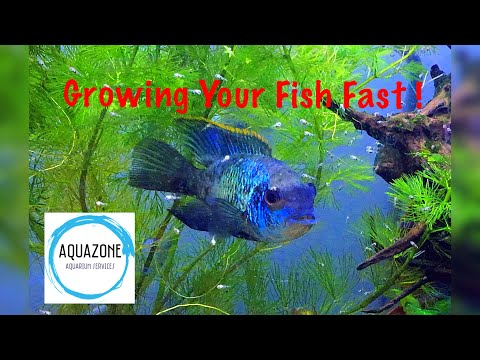 How To Grow Fish / Temperature Vs Metabolism Vs Food Intake