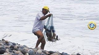 Pescador Atrapa Grandes LISAS con ATARRAYA en el MAR
