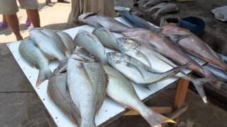 Рыба-шикарный улов подарил океан Шриланки(, 2014-09-21T17:45:25.000Z)