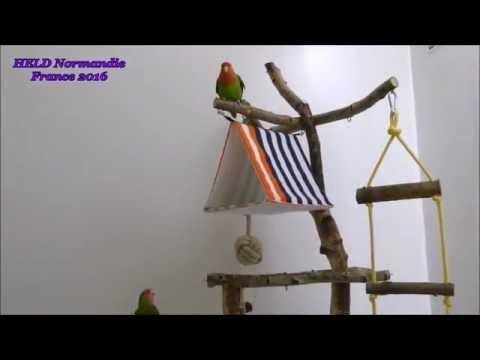 fabriquer maisons perchoirs jouets destructibles pour oiseaux 207 youtube. Black Bedroom Furniture Sets. Home Design Ideas
