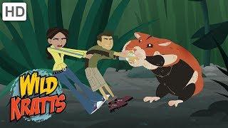 Wild Kratts - Aquatic Life Creature Power