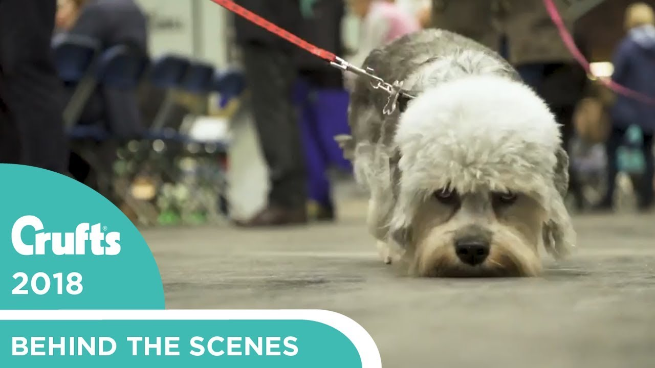 Crufts 2018 As We Go Behind The Scenes