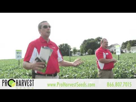 Field Day Soybean Plot