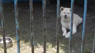 稚内の動物ふれあいランドにいるスター犬たちです。