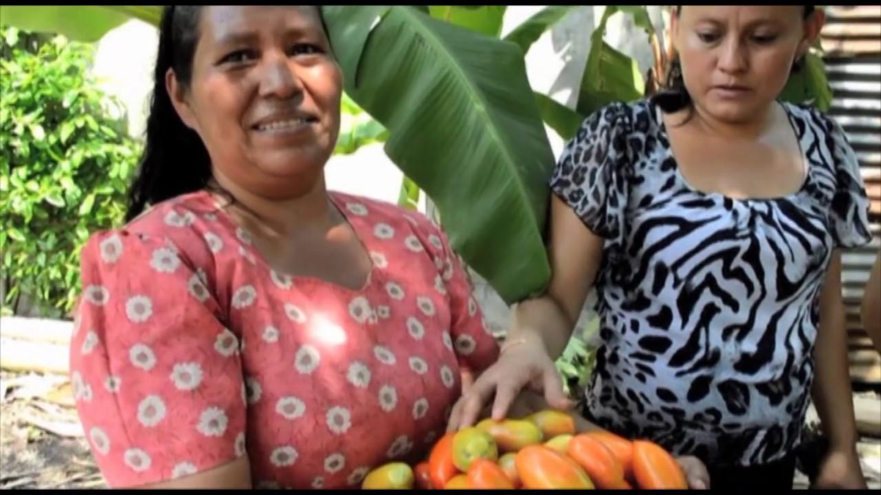 Experiencia sobre Seguridad y Soberanía Alimentaria en la Diócesis de Sonsonate.