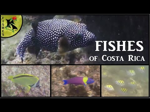 Pacific Nearshore Fishes - Costa Rica Part 2