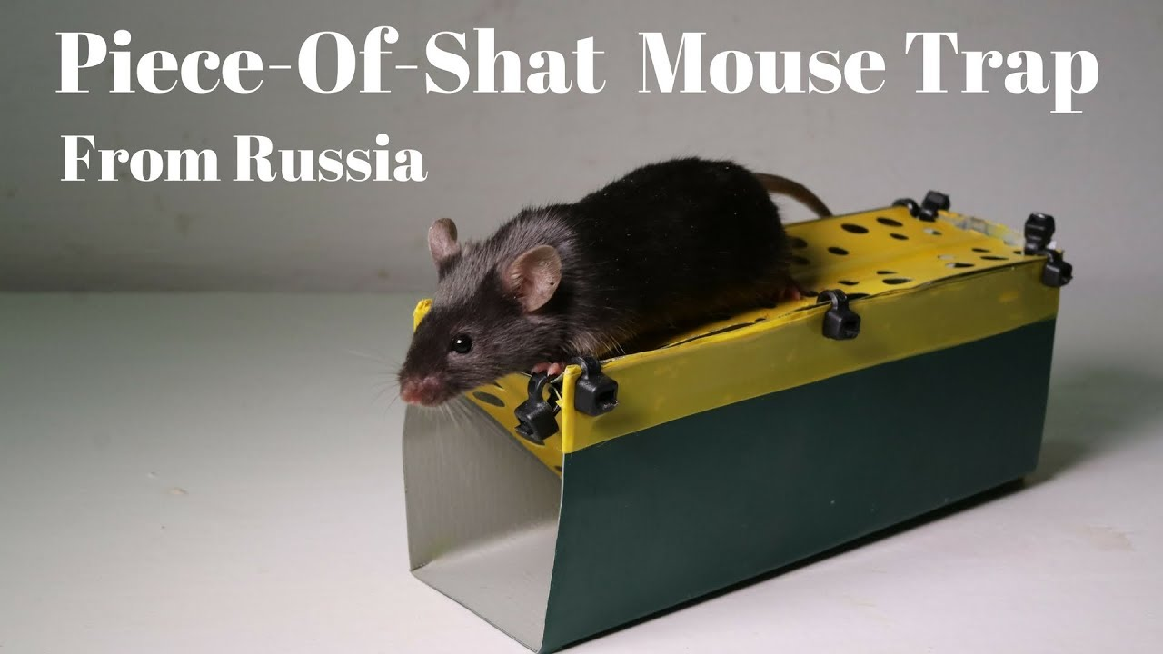 the-piece-of-shat-mousetrap-from-russia-sold-on-amazon