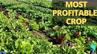Grow Your Own Salad Mixes and Baby Greens by Direct Seeding