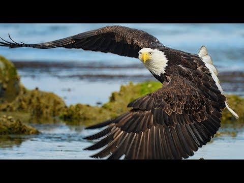 News of Eagle Nests across North America - D.C.Nest - MR. PRESIDENT & 1st  LADY / NEFL 2 hatches😀😀