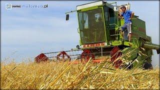 Susza pustoszy! Rolnicy liczą straty, a leśnicy apelują o ostrożność w lasach