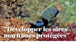 """Une idée pour sauver les océans : """"Développer les aires maritimes protégées"""" par Laurent Balles"""