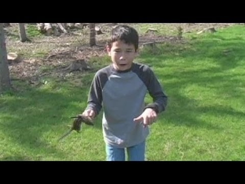 Kids learning to Bow Hunt on Small Game in the back yard PRACTICE