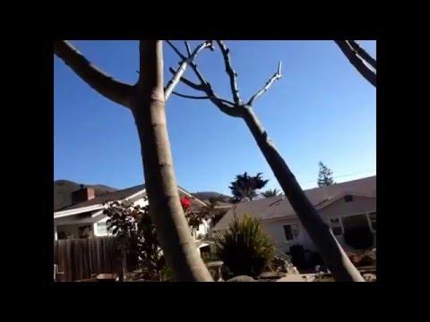 San Luis Obispo Weather