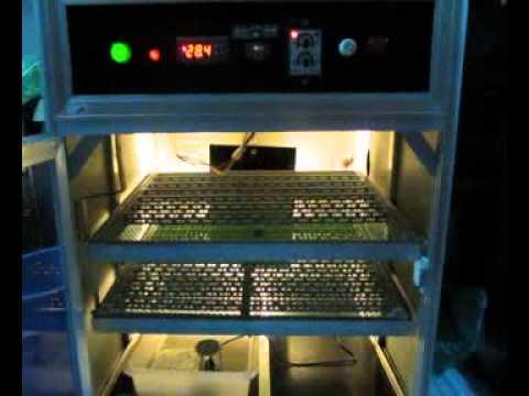 máy ấp lin 200 (citythaibinh 0983244680)