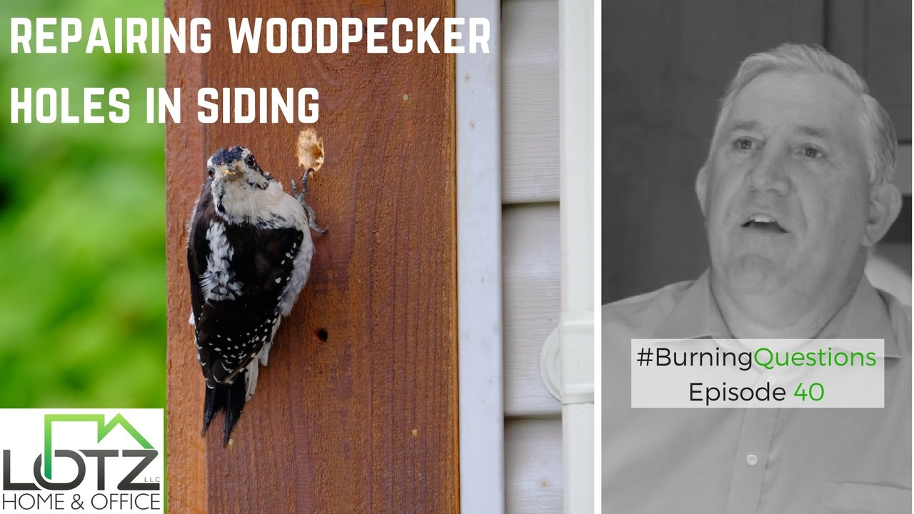 how to repair woodpecker holes in cedar siding | naperville siding