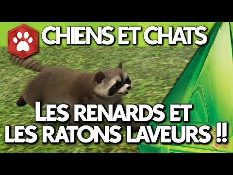 Les Sims 4   CHIENS ET CHATS   Q&R des SimGurus (renards