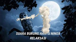 Download Suara Burung Hantu Ninox