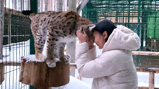 A PANTHER ATTACKED A MAN / I pet a gentle lynx / Servals, cougars and others at the Lampushka Zoo