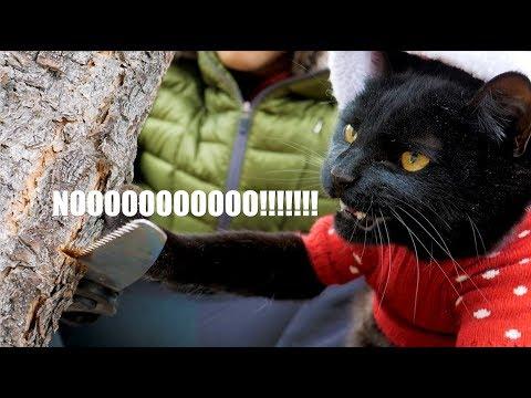 Kitty Saves Christmas
