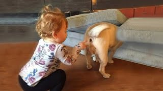 Adorable Babies Playing With Dogs   Cutest Home Videos