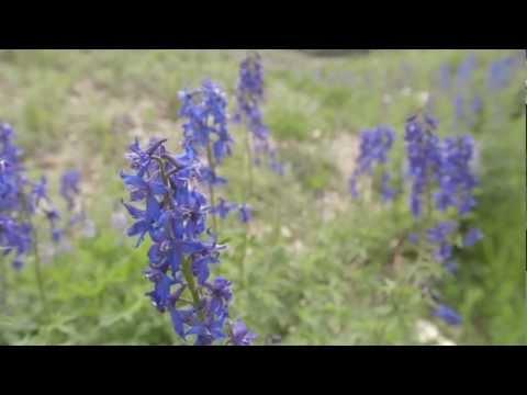 Wildflower Guide: Beautiful Native Plants on Utah's Wasatch Plateau